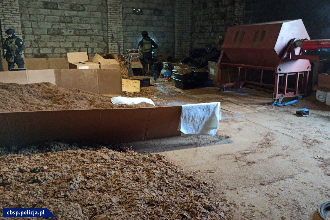 Dwóch funkcjonariuszy w pomieszczeniu do suszenia tytoniu. Na podłodze leżące liście tytoniu.